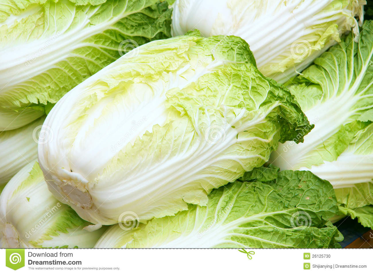 Chinese Cabbage Stock Image | CartoonDealer.com #578185