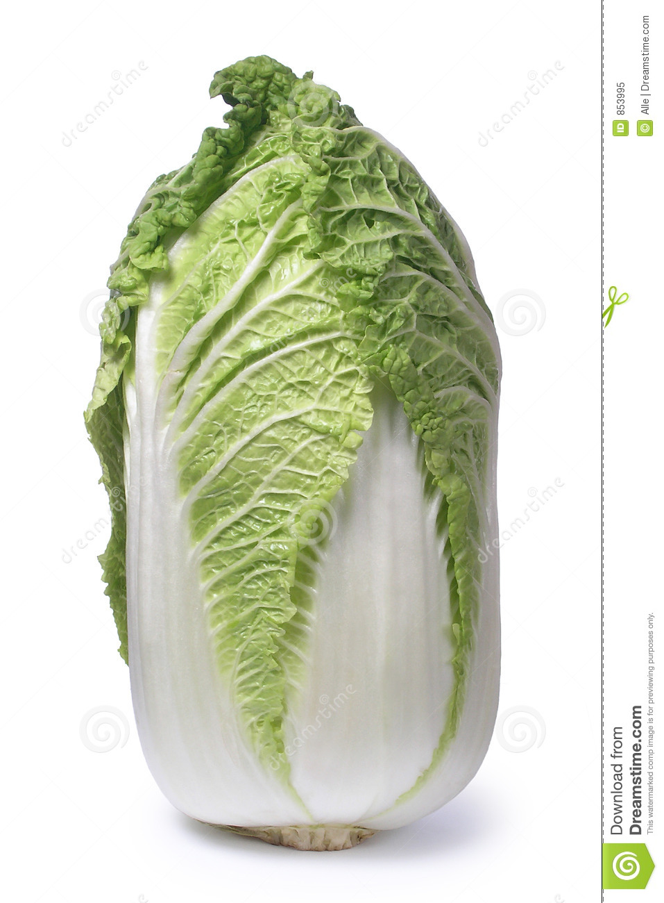 Chinese cabbage stock image. Image of white, green, food ...