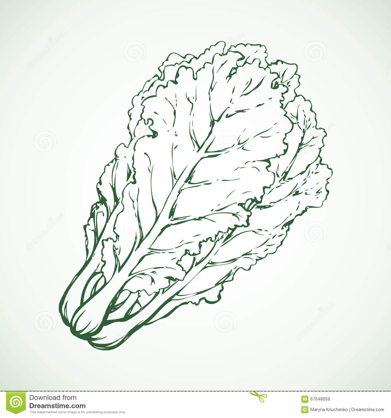 Chinese Cabbage. Vector Illustration Cartoon Vector ...