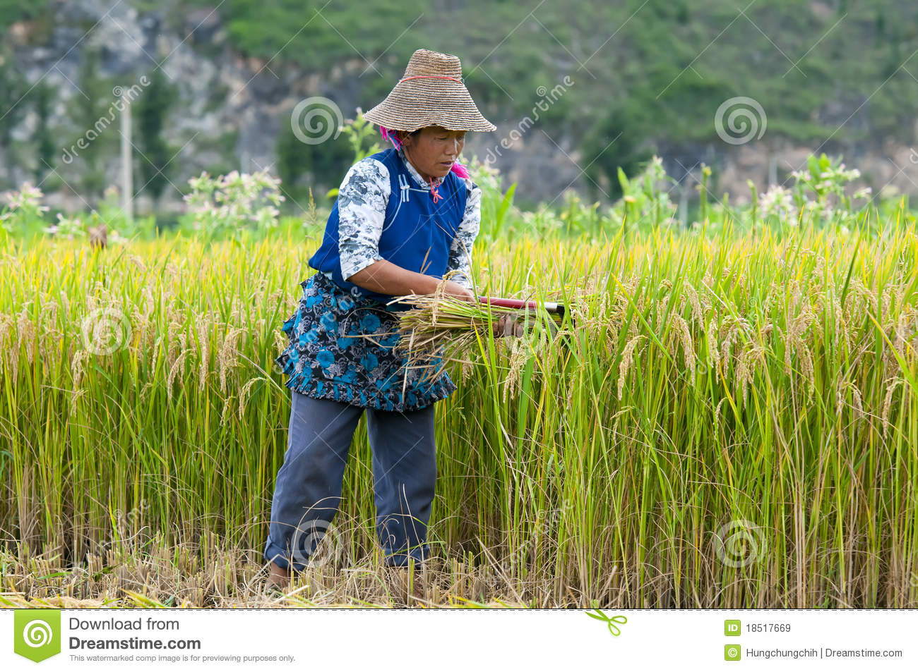 chinese farmers - photo #46