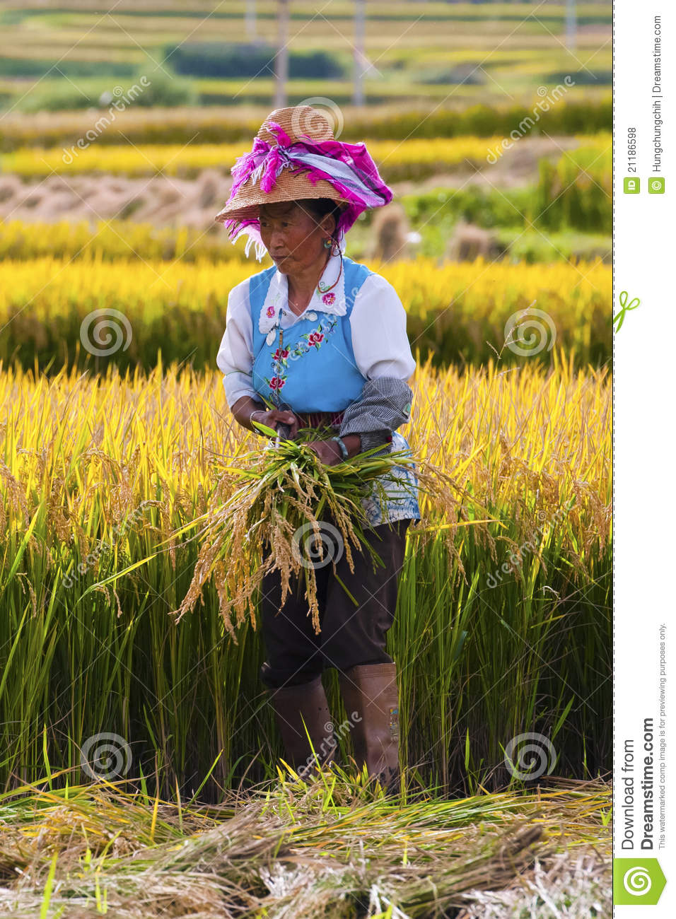 farmer asian personals Asian dating center, farmers branch, texas 120 likes 44 were here local business.