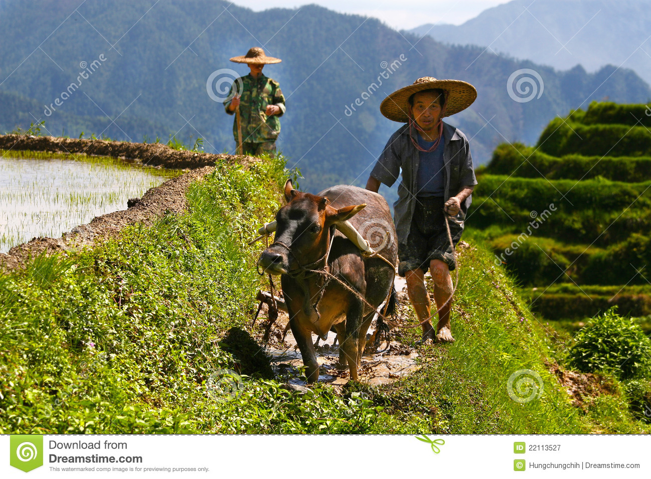 chinese farmers - photo #19