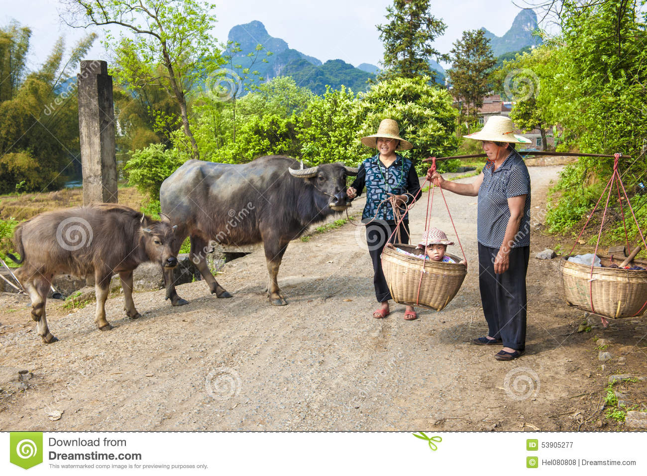 Chinese farmwomen with buffaloes and baby in basket