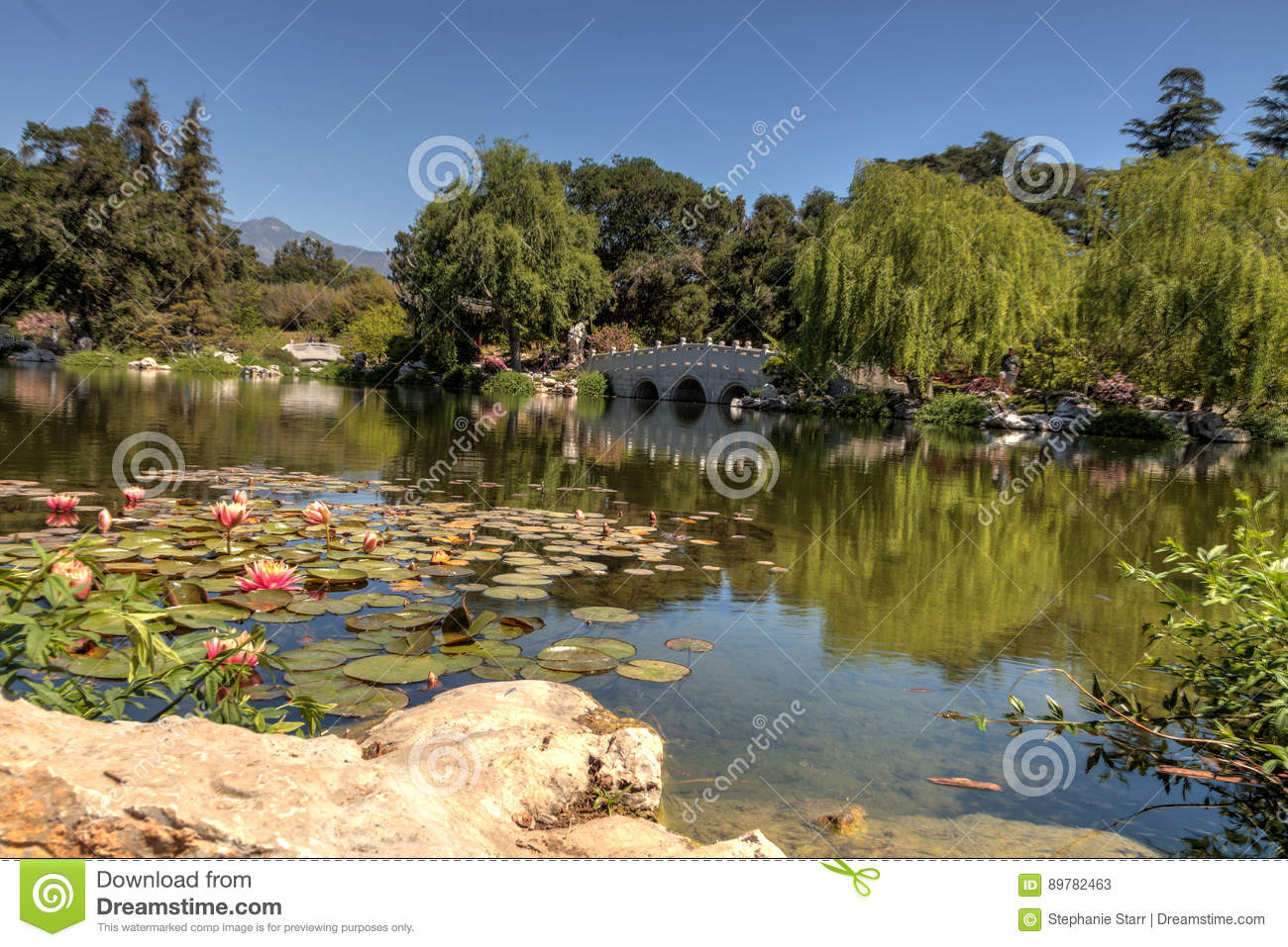 Chinese Garden At The Huntington Botanical Gardens Editorial Stock ...
