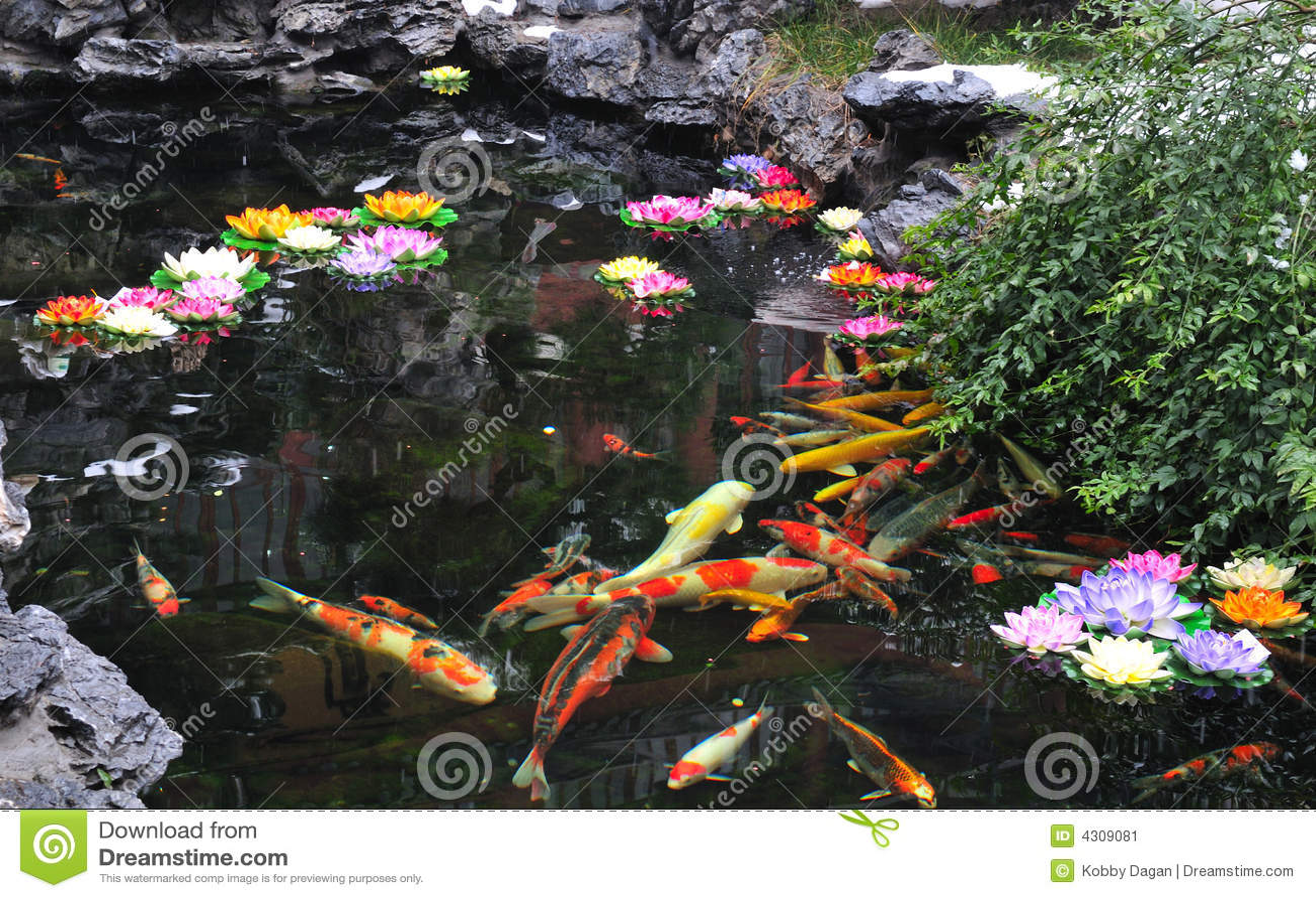 traditional japanese koi pond chinese koi pond stock image image 4309081
