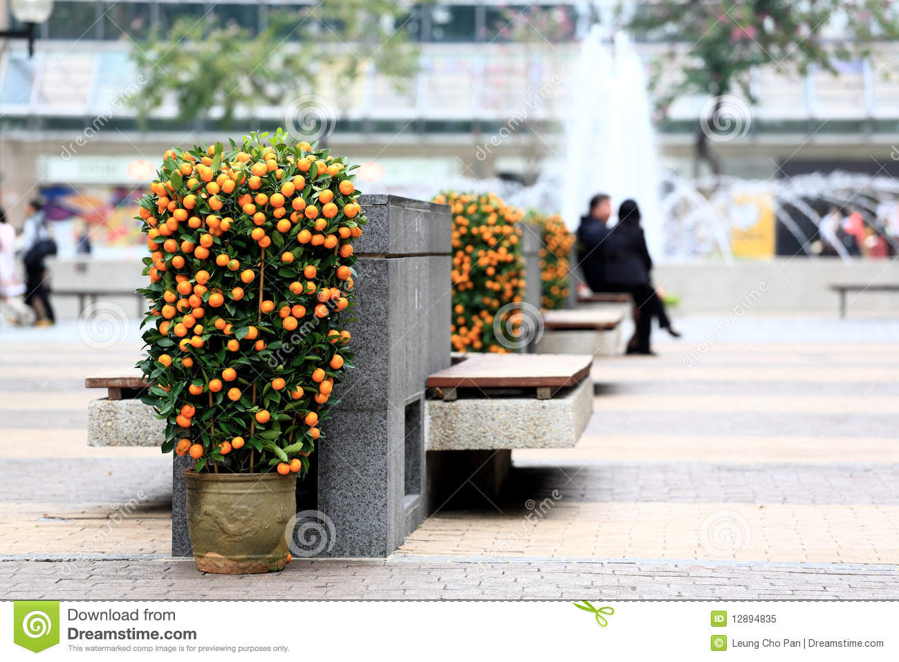 Chinese new year kumquat royalty free stock photo image for Chinese in the area