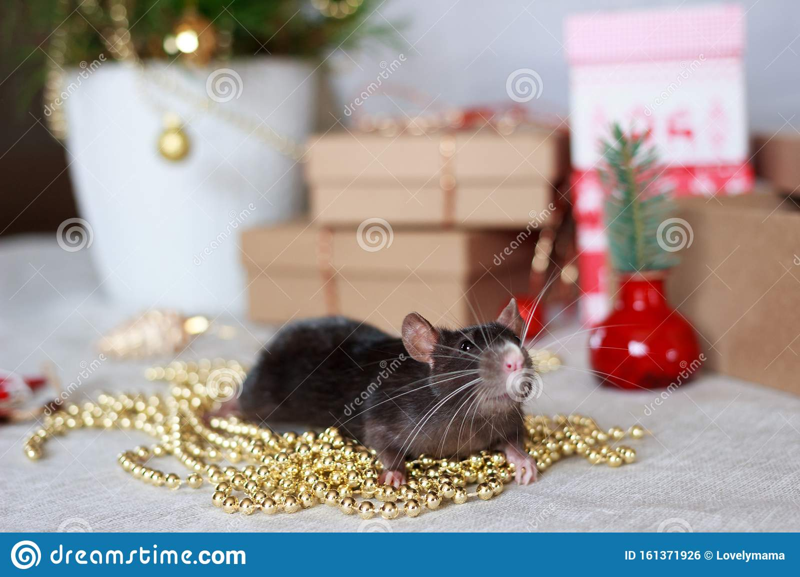 Chinese New Year Rat With Festive Decorations. Stock Photo ...