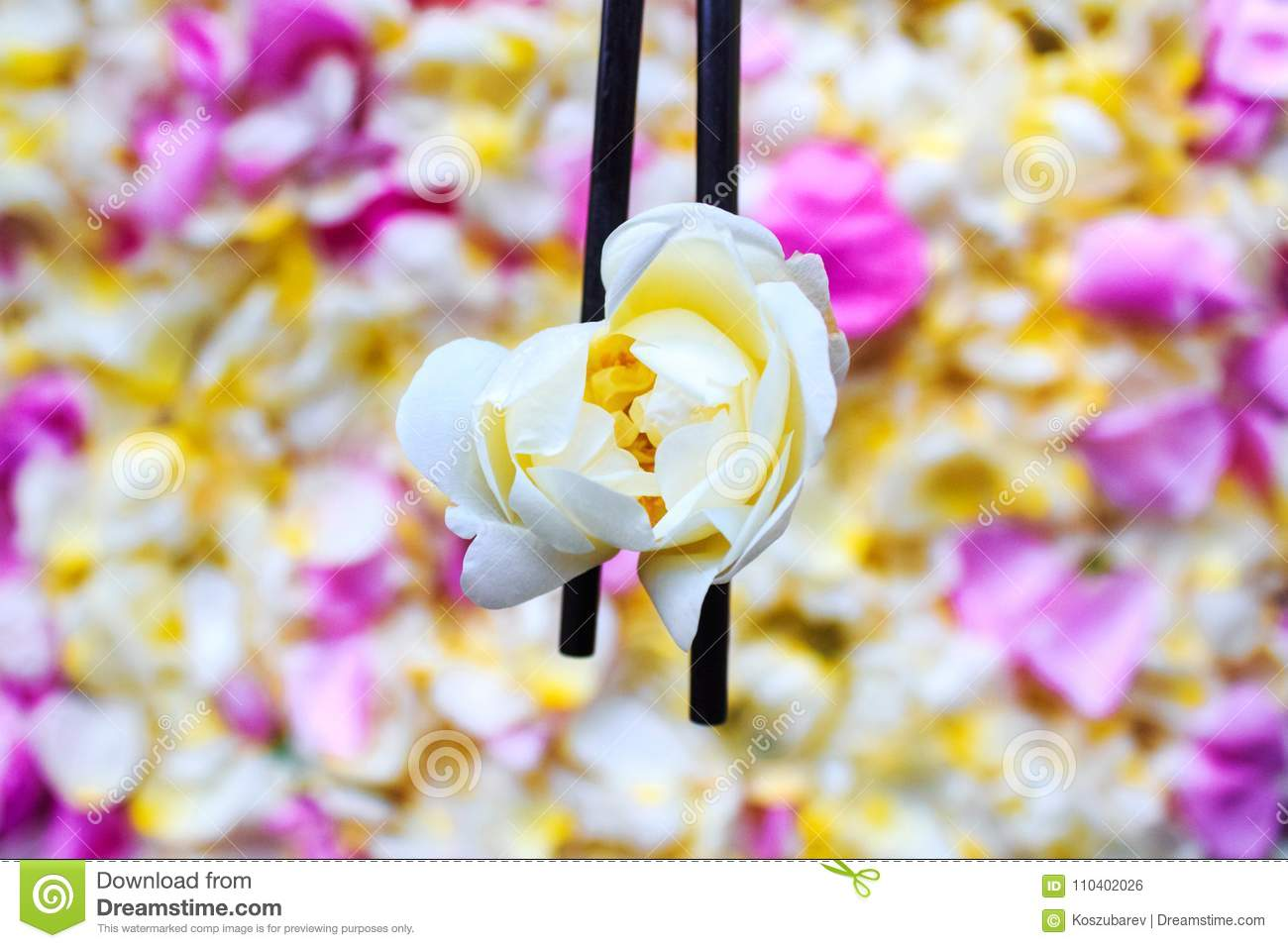 Chinese sticks hold a white jasmine stock photo image of nature chinese sticks hold a jasmine flower against the background of flower petals izmirmasajfo