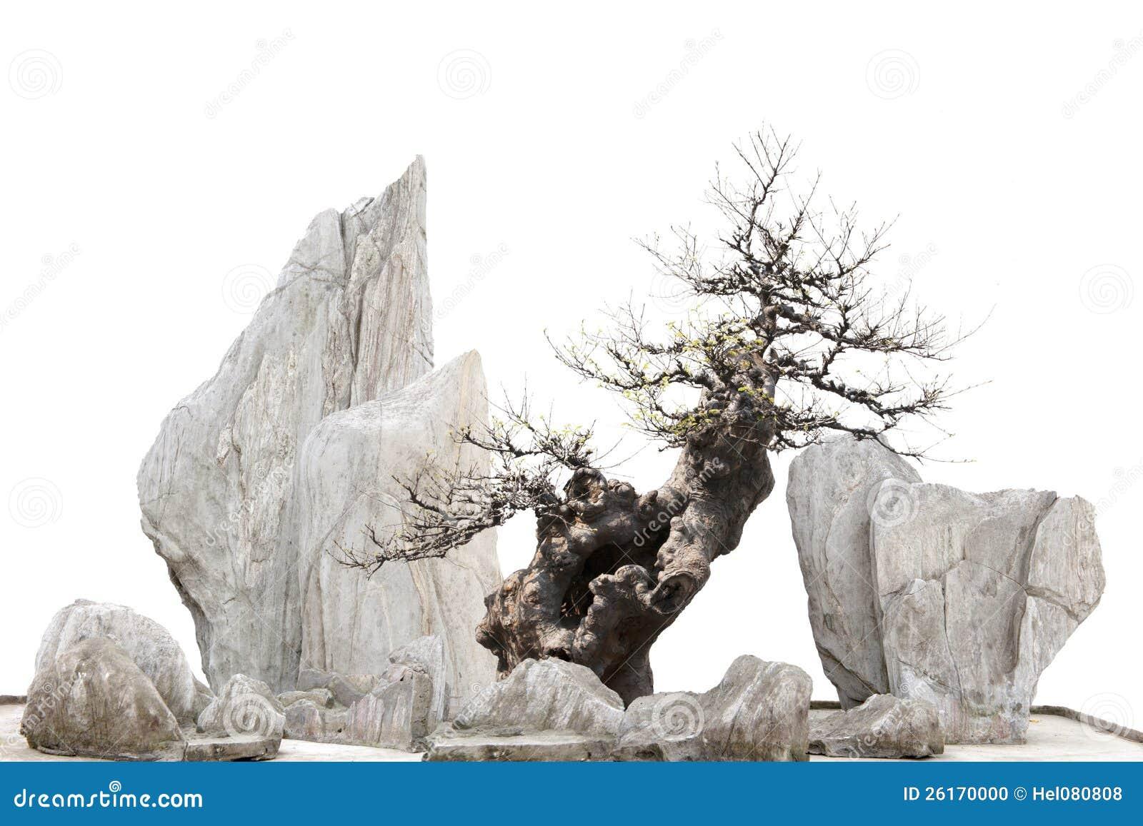 chinesisch japanischer bonsi baum und steine stockfoto. Black Bedroom Furniture Sets. Home Design Ideas