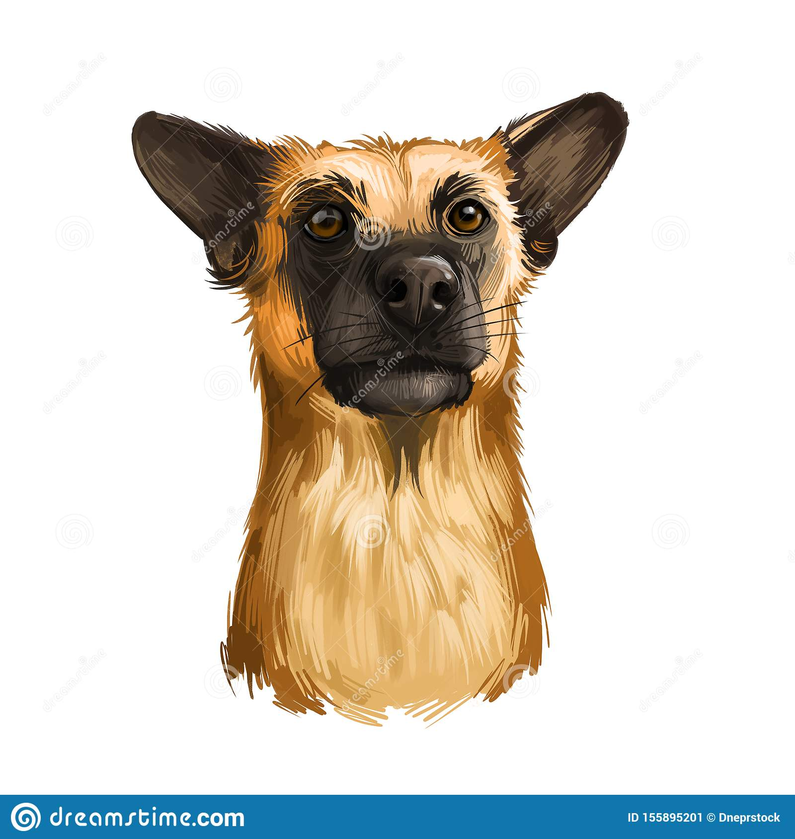 Chinook dog breed isolated on white background digital art illustration. Cute pet hand drawn portrait. Graphic clipart design real