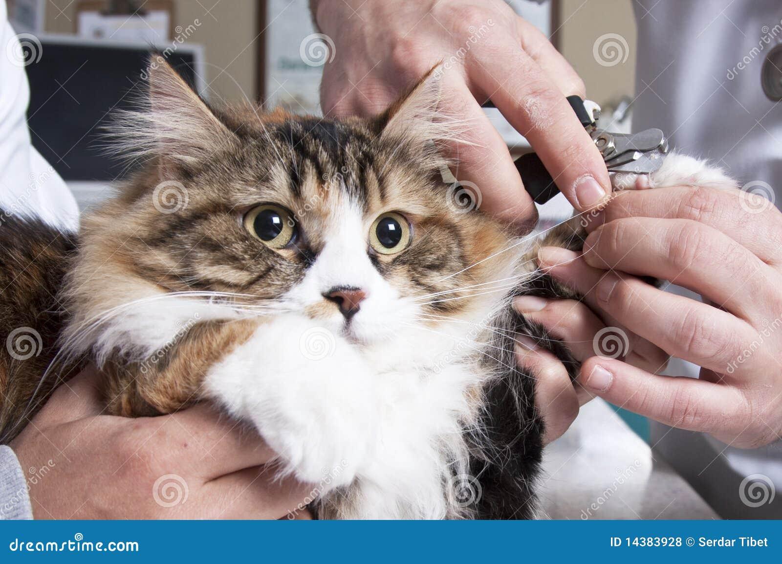 Chiodi del gatto della guarnizione