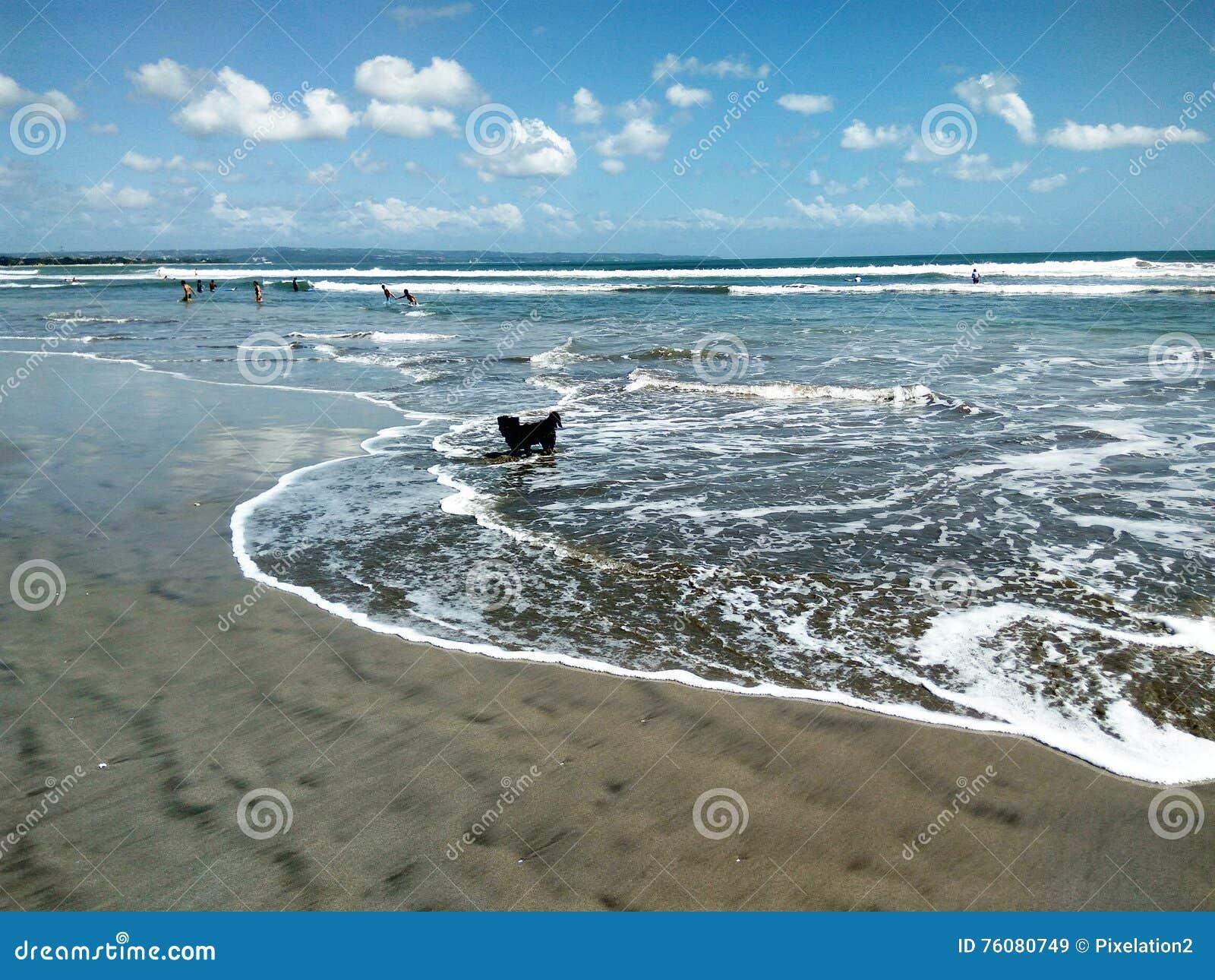 Chiot à la plage