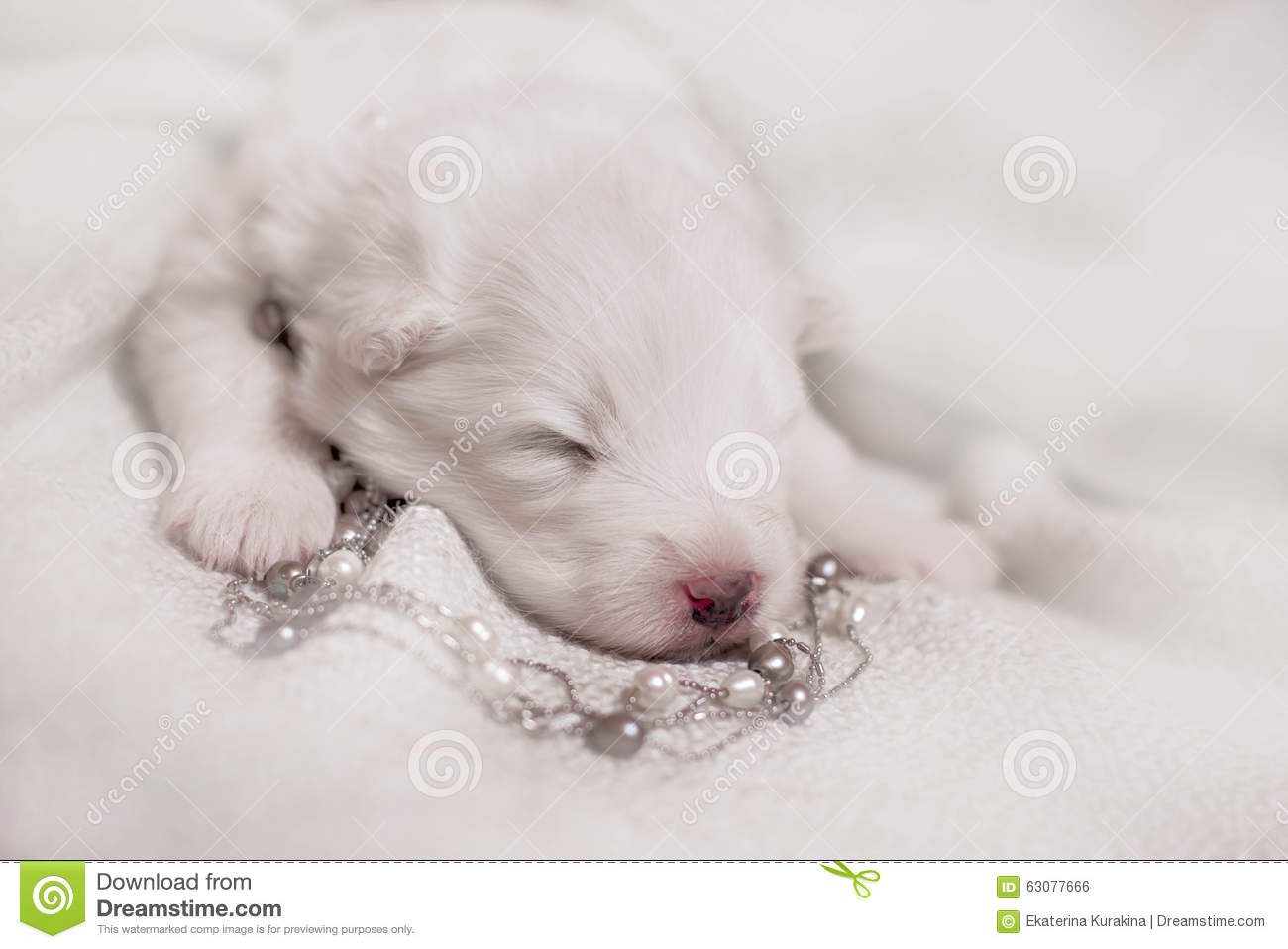 Download Chiot Blanc De Sommeil Adorable Photo stock - Image du verticale, innocence: 63077666