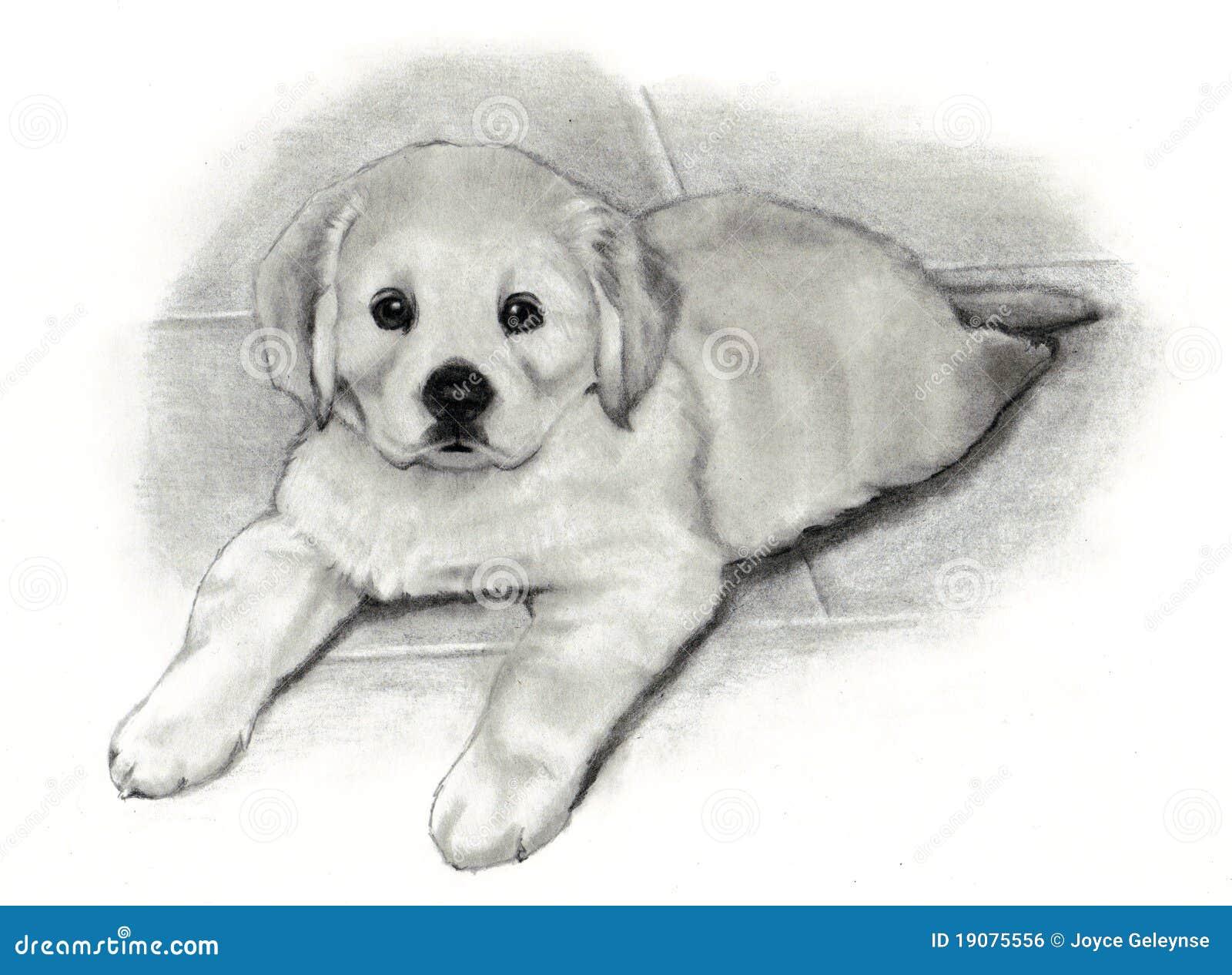 Chiot de chien d 39 arr t d 39 or de dessin au crayon image - Dessin d un chien ...