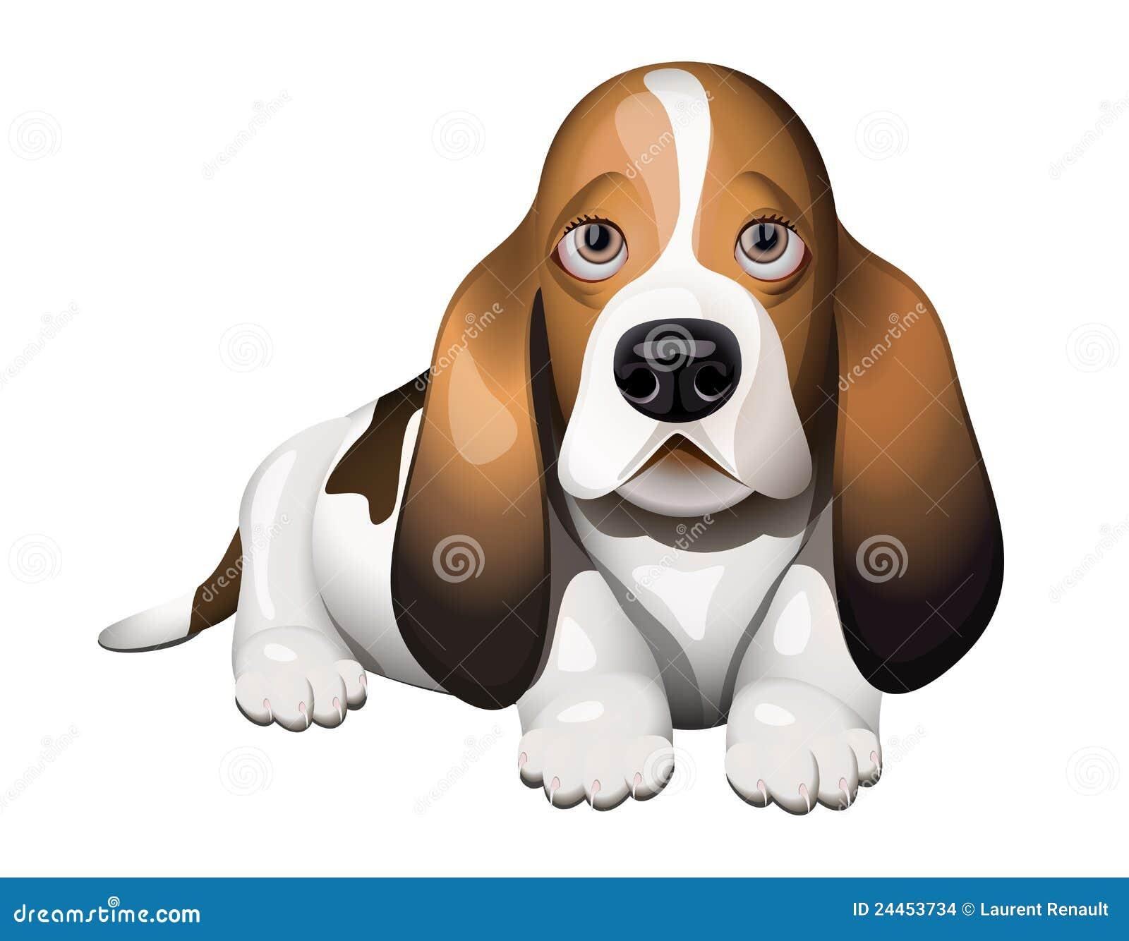 Chiot de chien de basset