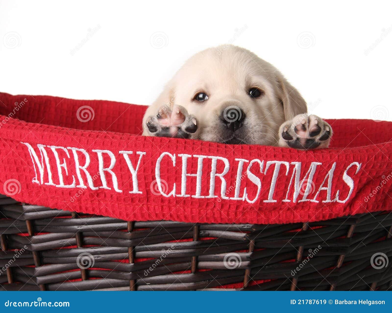 Chiot de Noël