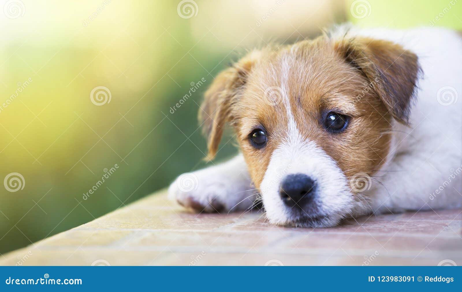 Chiot mignon adorable d animal familier pensant - poursuivez le concept de thérapie