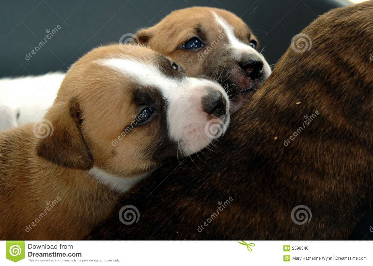 Chiots Snuggling