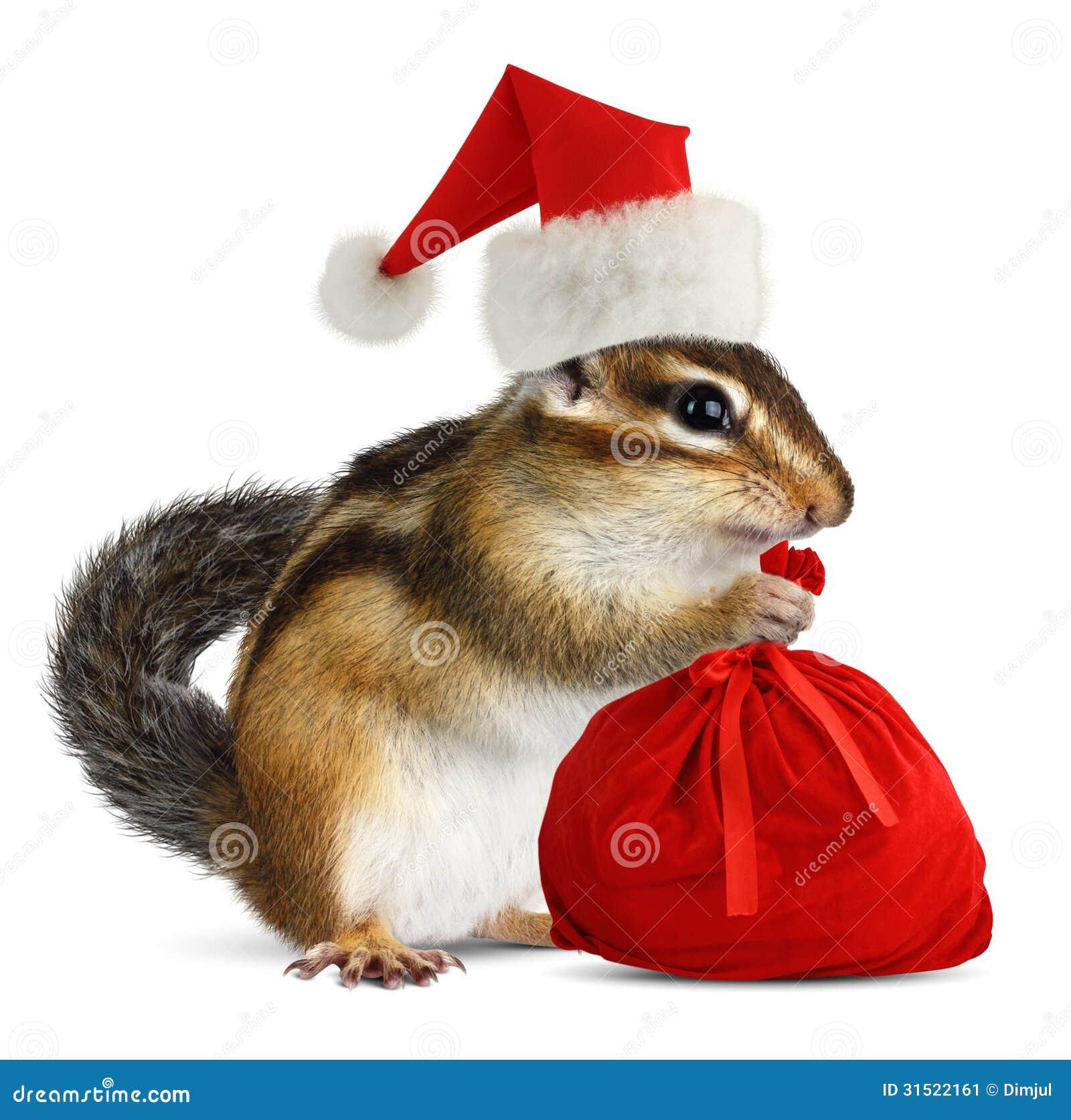Chipmunk In Red Santa Claus Hat With Santas Bag Stock Image - Image ...
