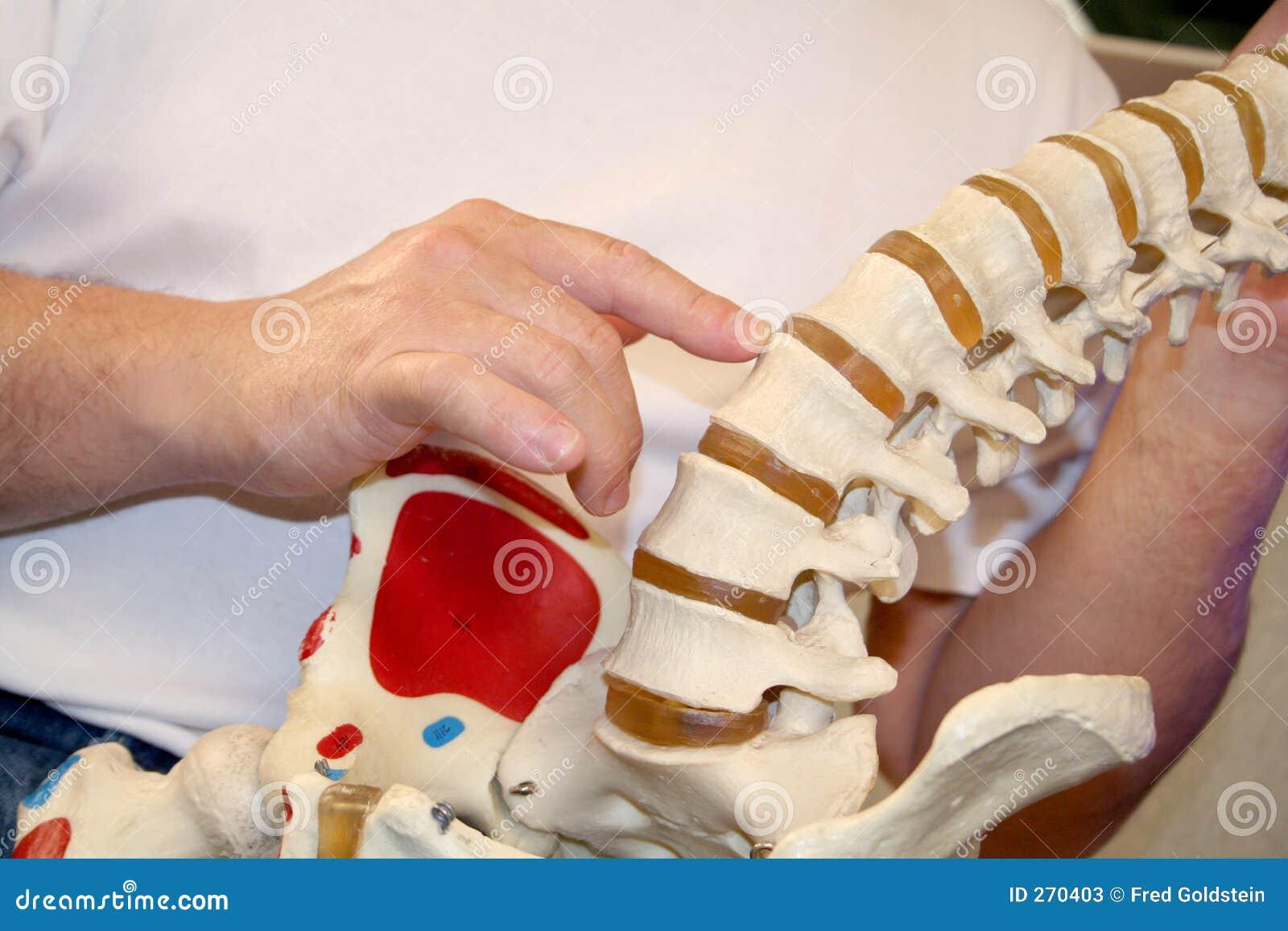 Chiropraktyki