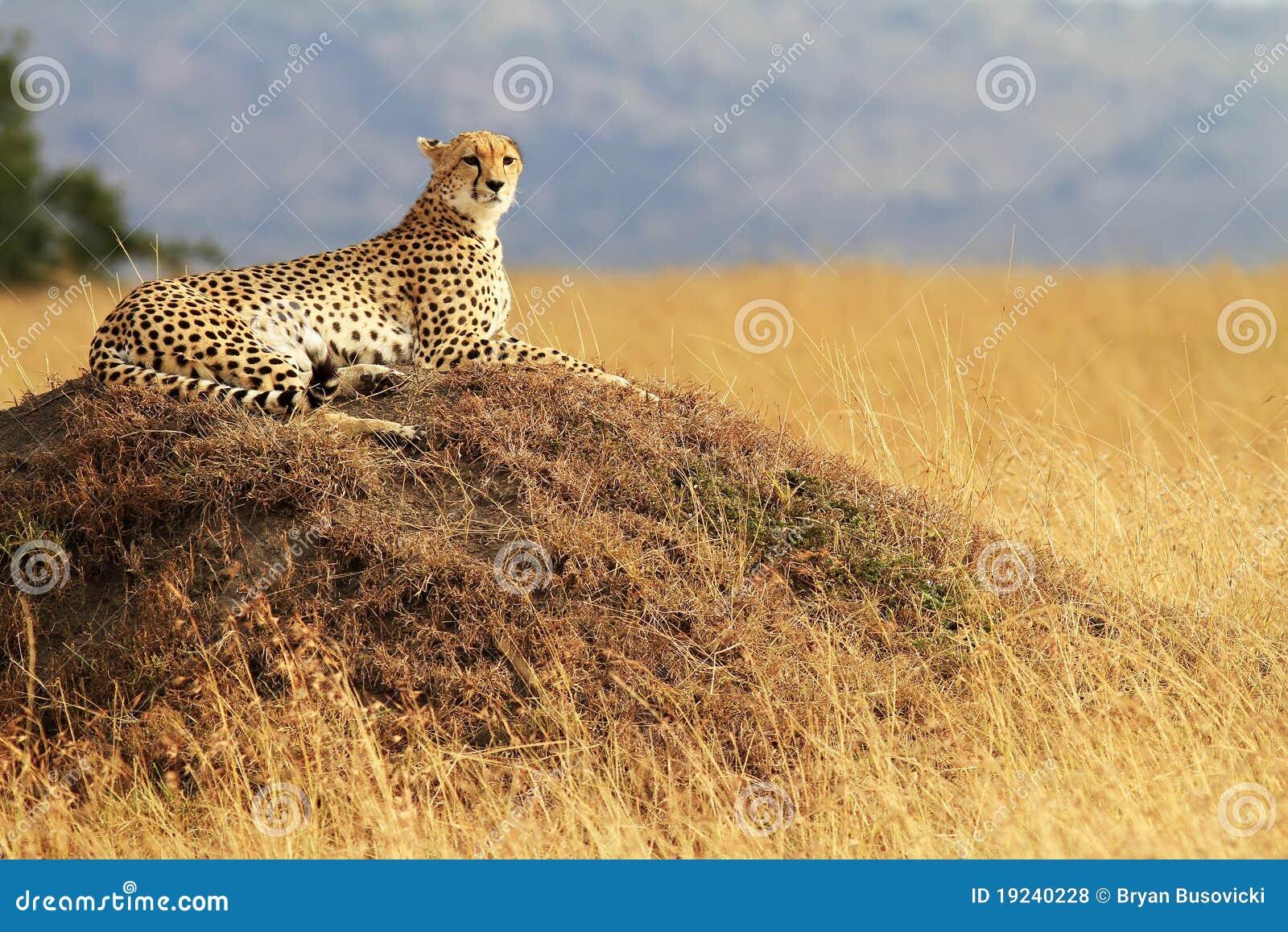 Chita de Mara do Masai