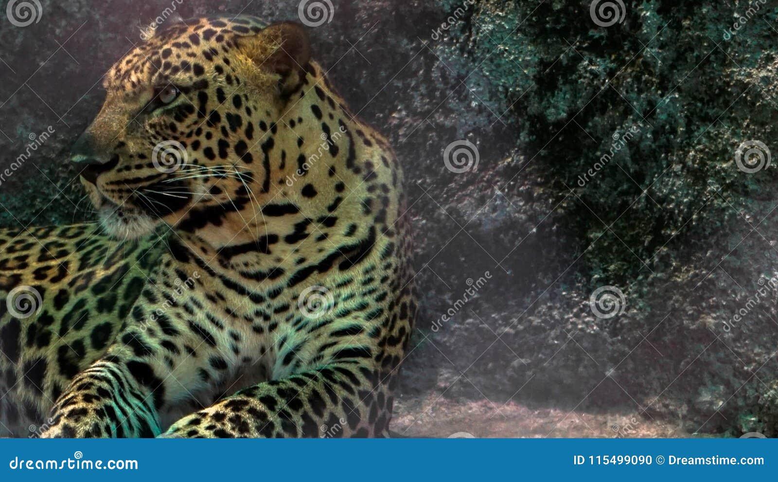 Chita no jardim zoológico