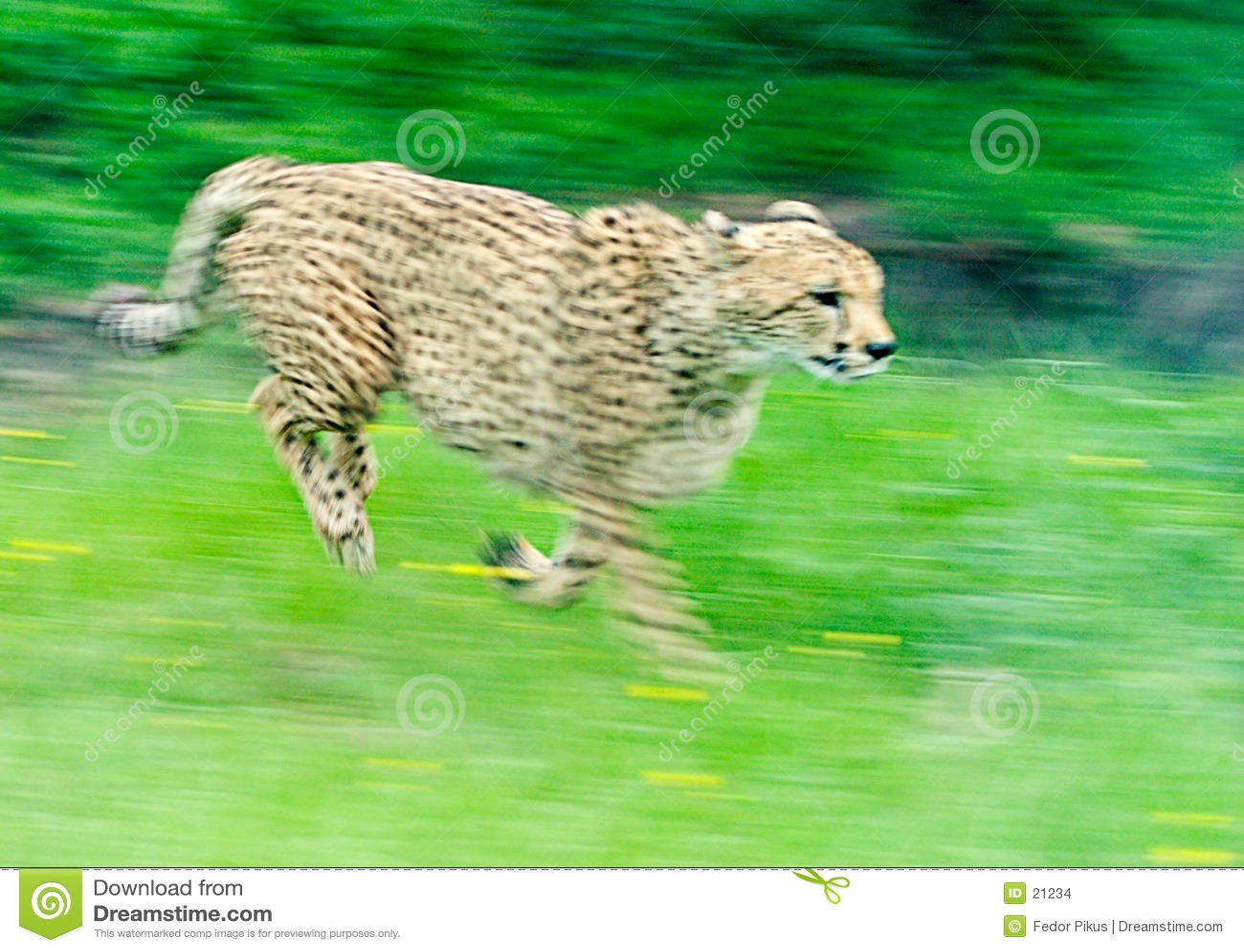Chita Sprinting