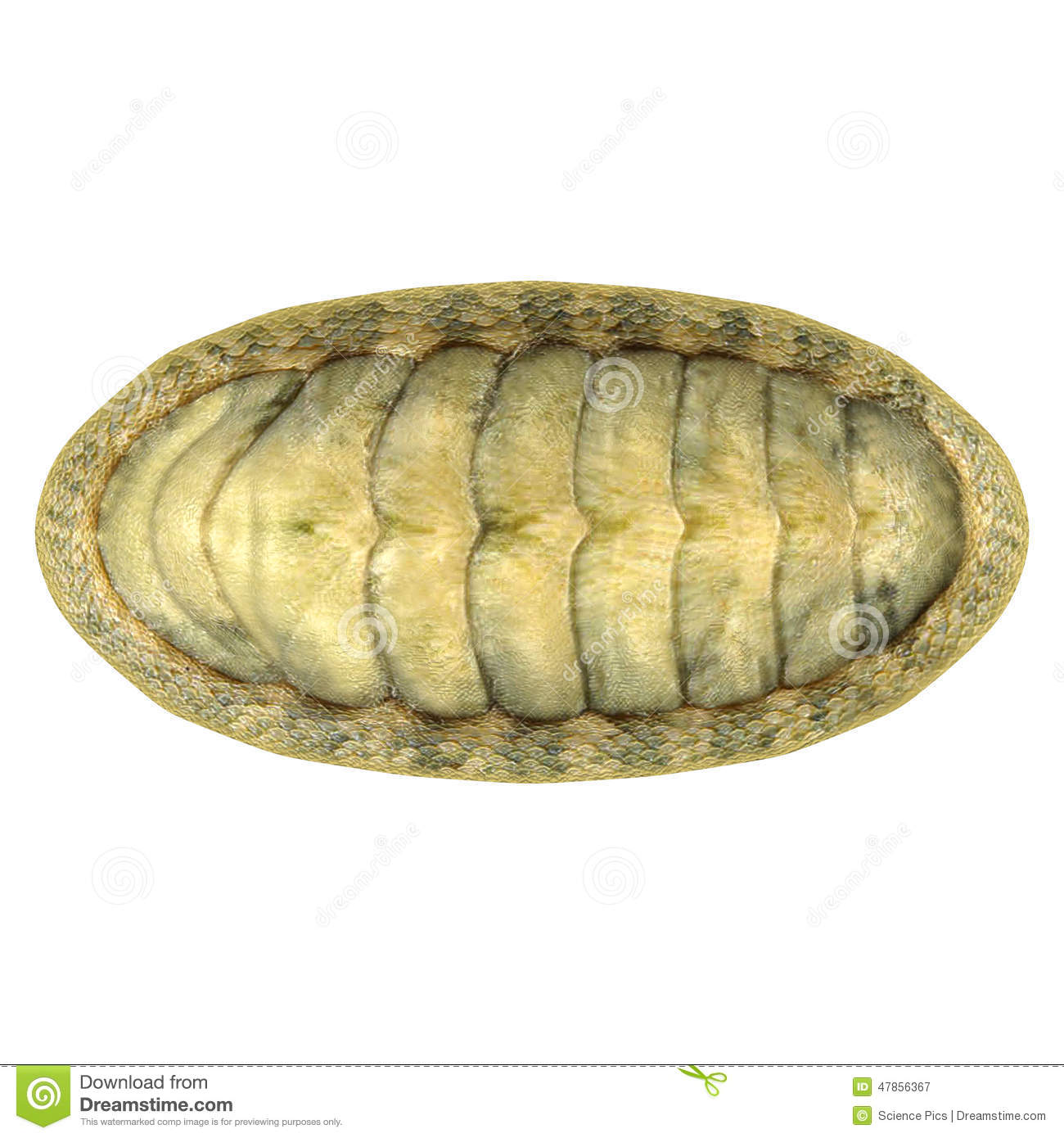 Chitons are small to large marine molluscs in the class Polyplacophora ... Pacific Ocean Underwater Map