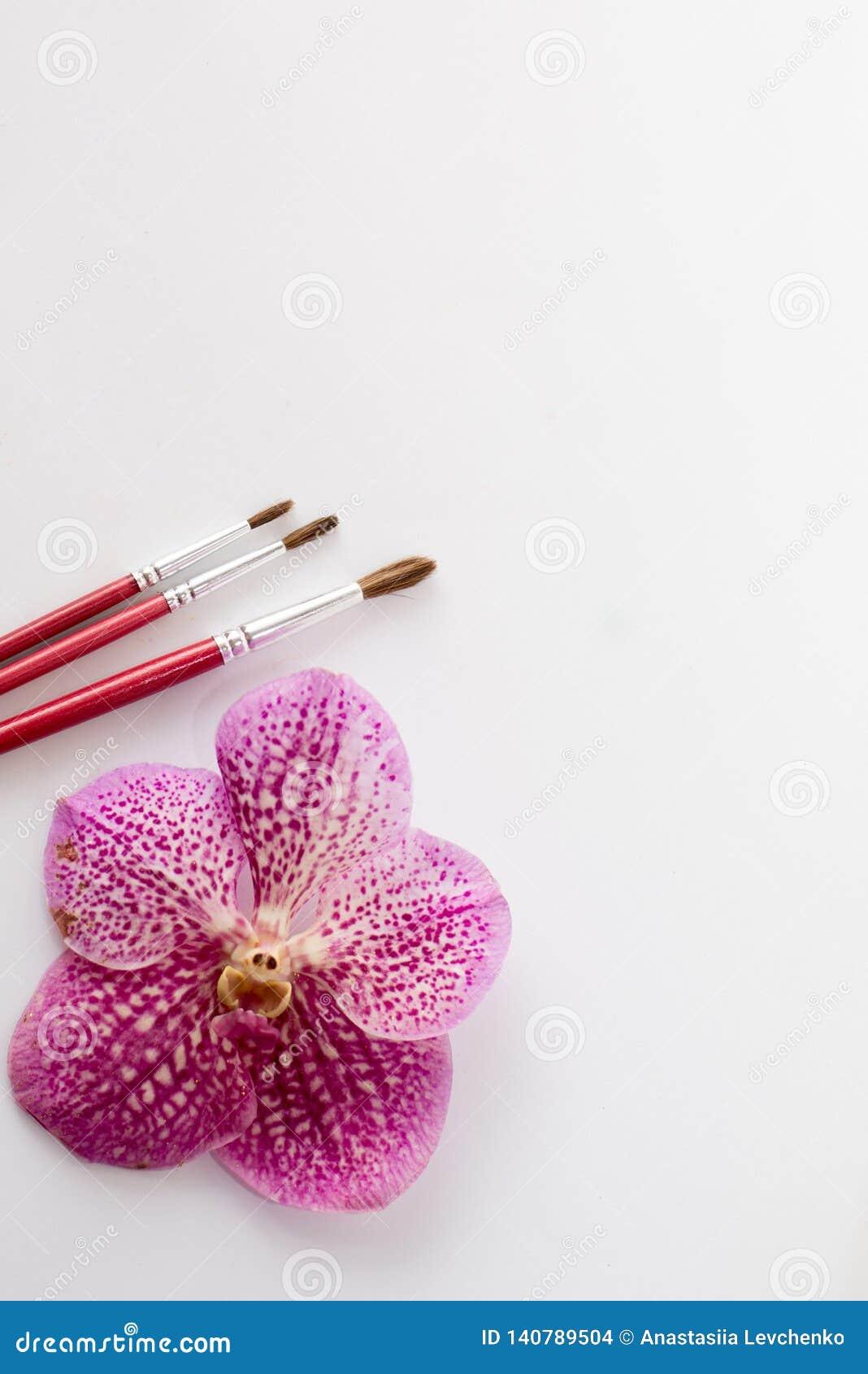 Chiuda su dei pennelli rossi con il fiore rosa isolato su fondo bianco tavola per pittura testo