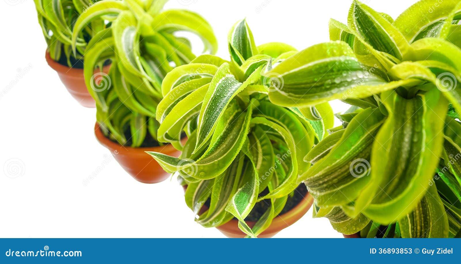 Download Chiuda su del fiore immagine stock. Immagine di people - 36893853