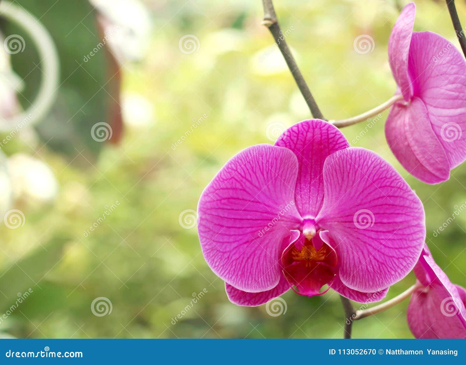 Orchidee illuminazione artificiale: di quanta luce hanno bisogno le