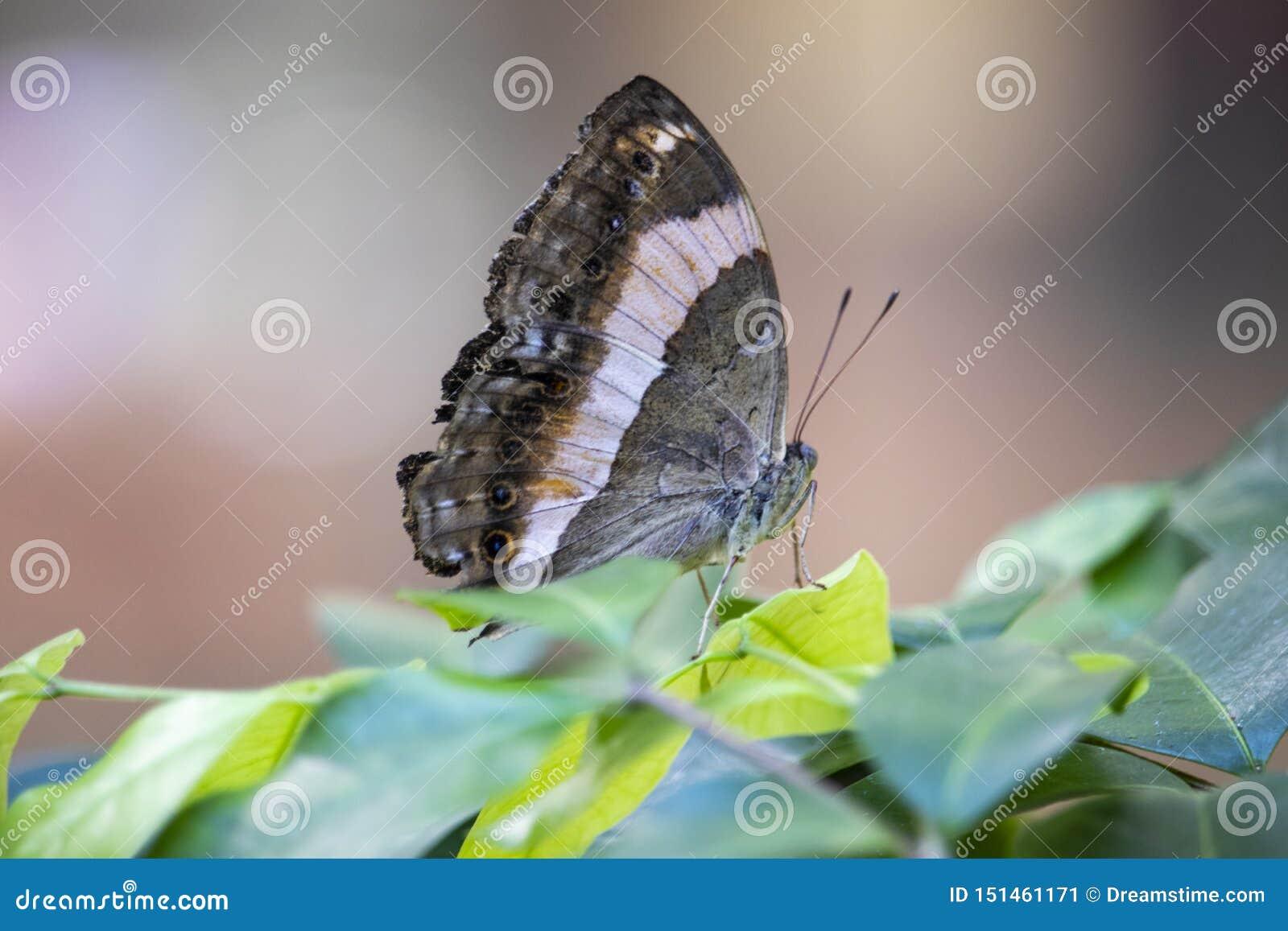 Chiuda su della farfalla su una foglia