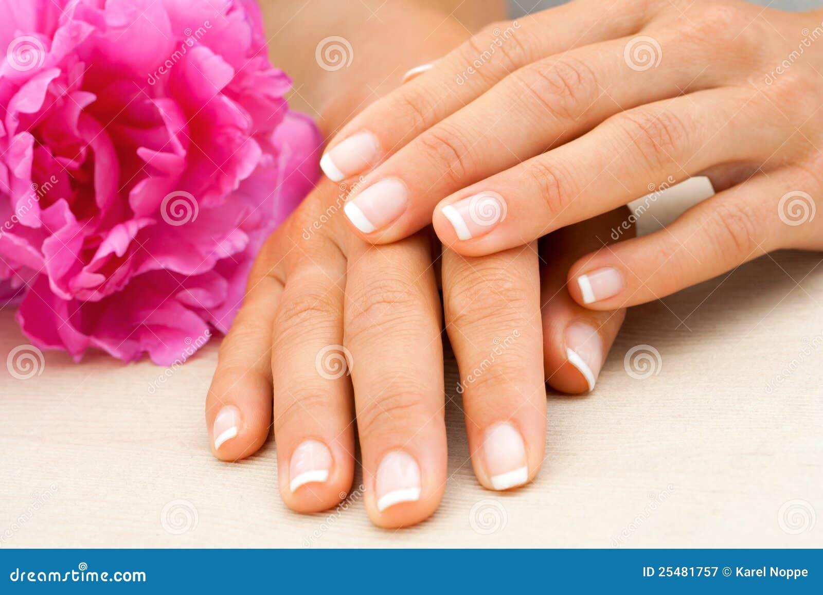 Chiuda in su delle mani femminili con il fiore.