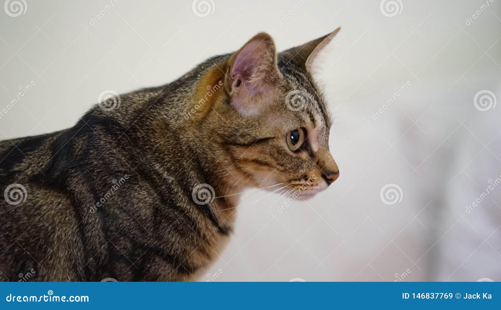 Chiuda su un gatto sparato