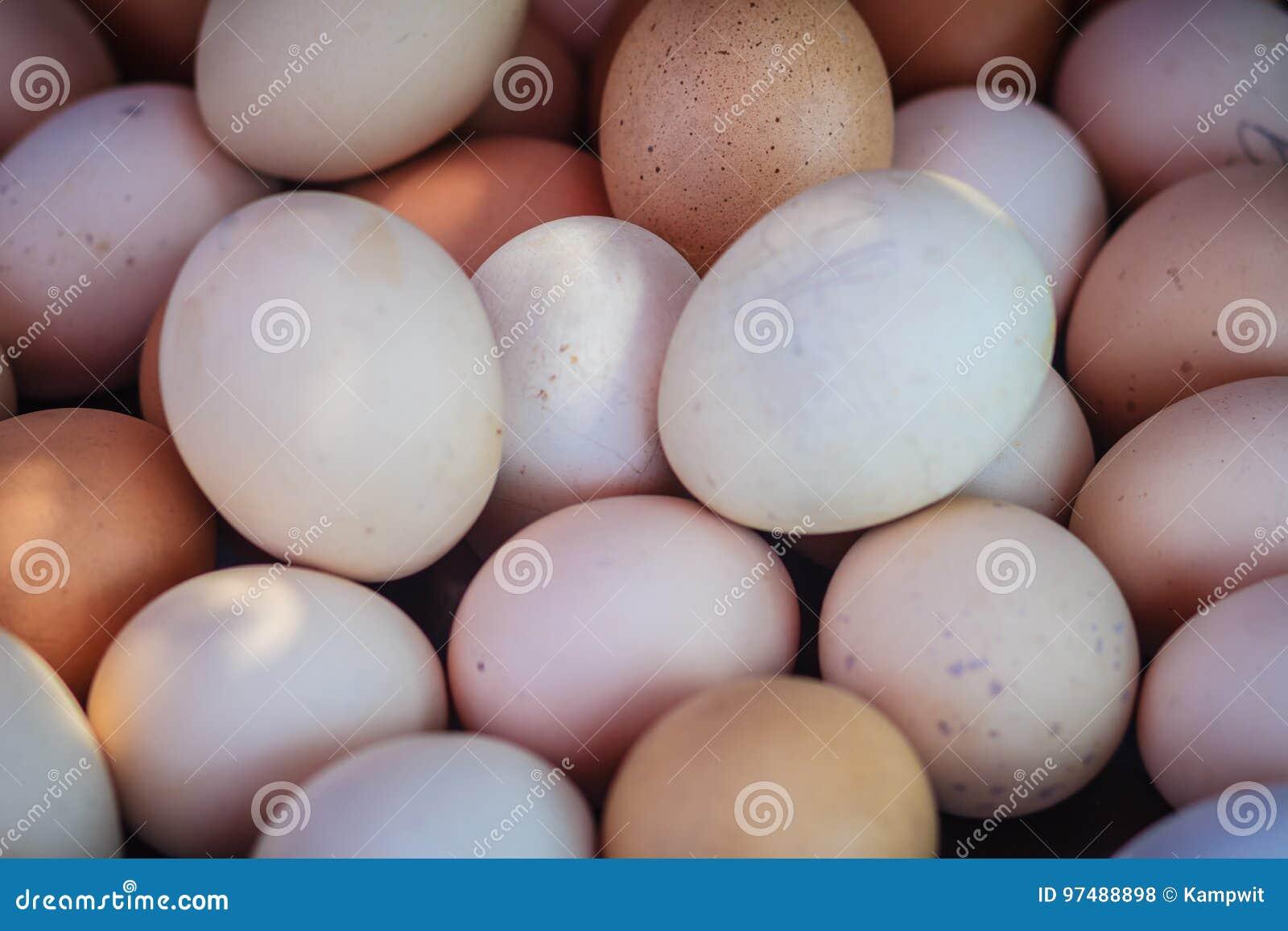 Chiuda sul fondo bianco e marrone delle uova del pollo Bollito o gril