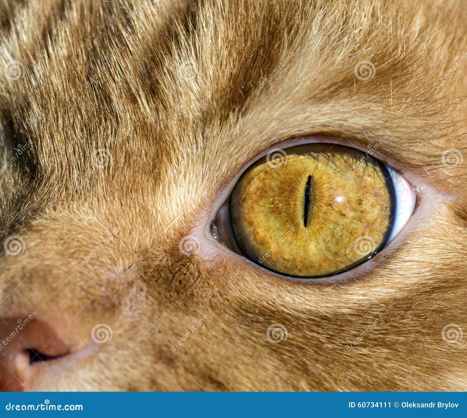 Chiuda sull 39 immagine dell 39 occhio del gatto immagine stock - Immagine del gatto a colori ...