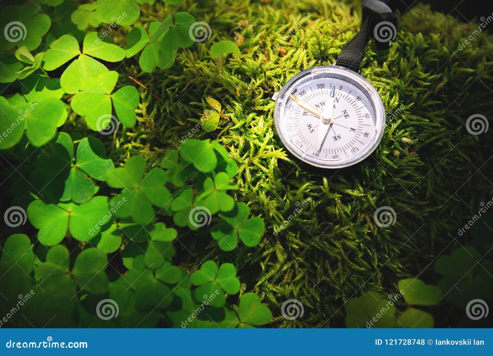 Chiuda sulla bussola di legno fatta a mano, ombre dell albero sulla terra verde dell erba della natura avventura di festa in buss