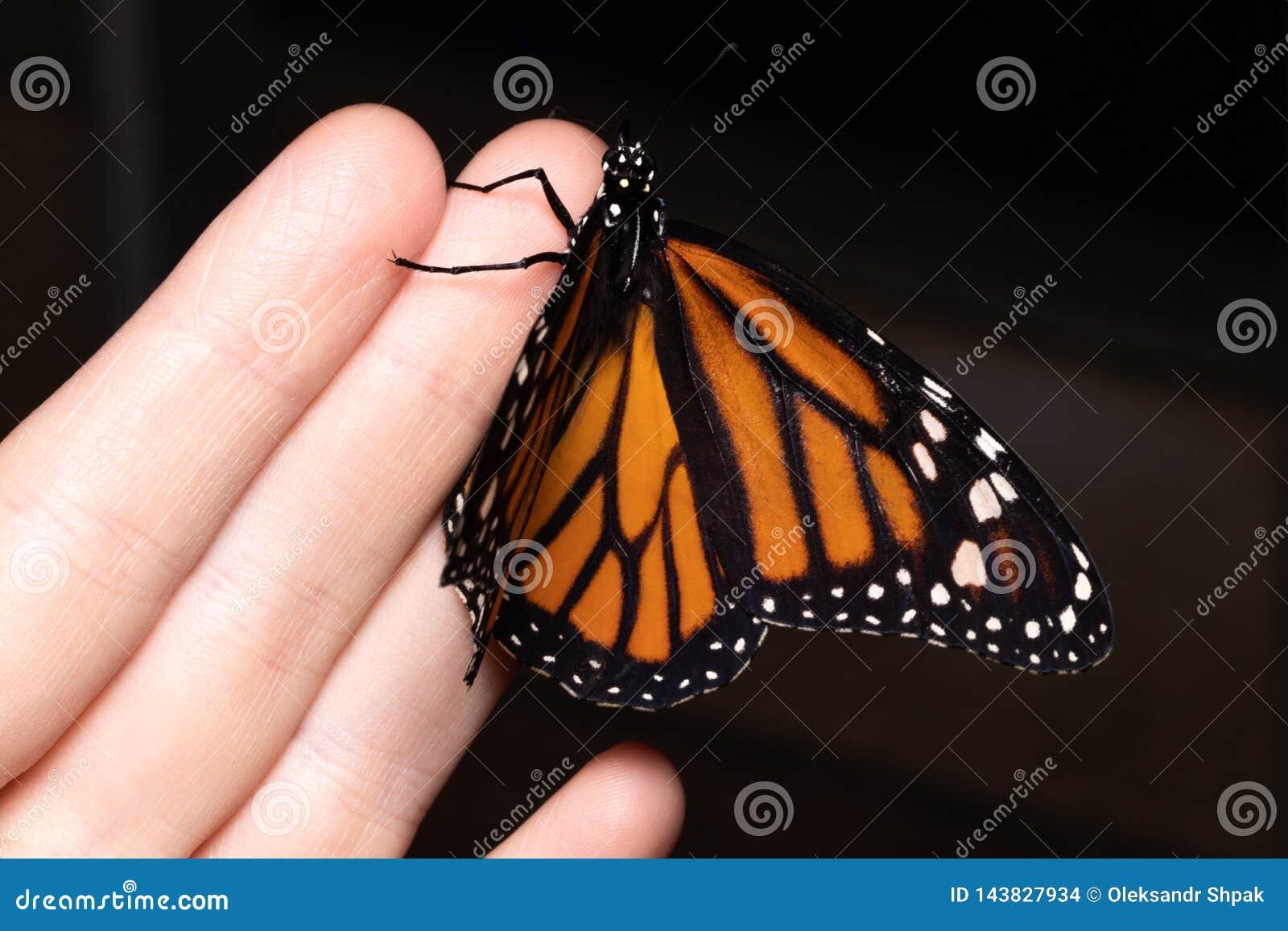 Chiuda sulla farfalla sulla mano della donna Bellezza della natura