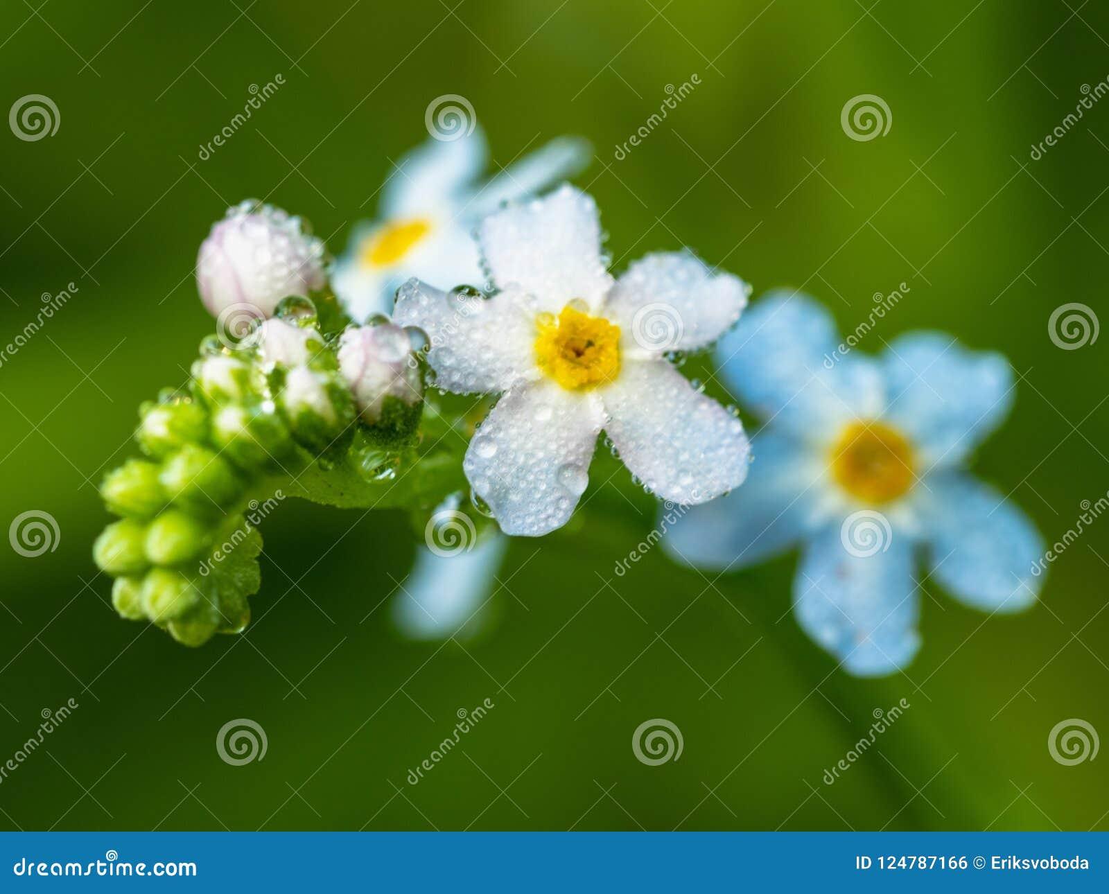 Pianta Verde Con Fiori Bianchi.Chiuda Sulla Vista Sulla Pianta Verde Che Fiorisce Con I Fiori