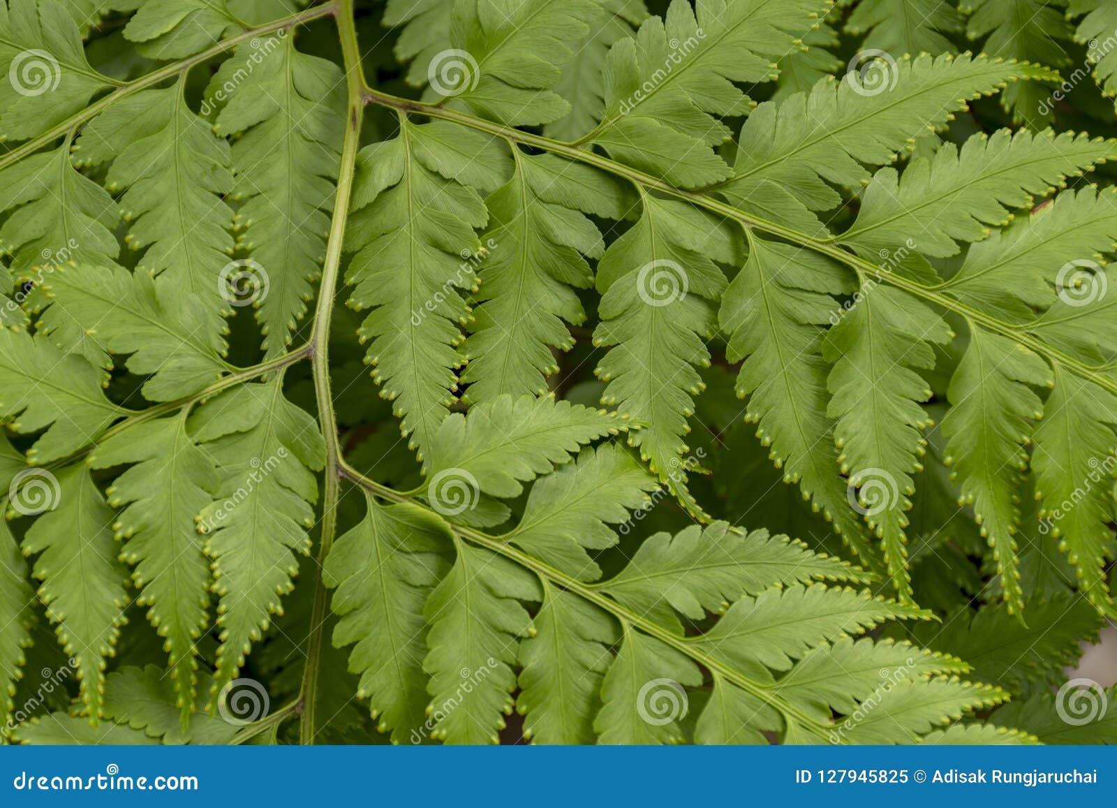 Chiuda sulle foglie verdi su un ramo per il fondo di struttura della natura