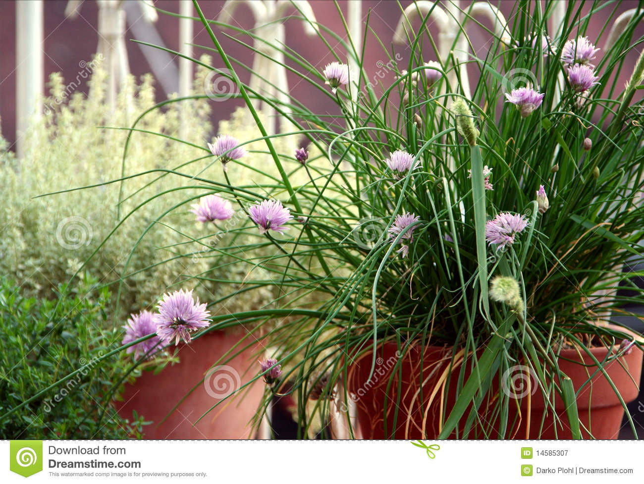 Chive and other herbs