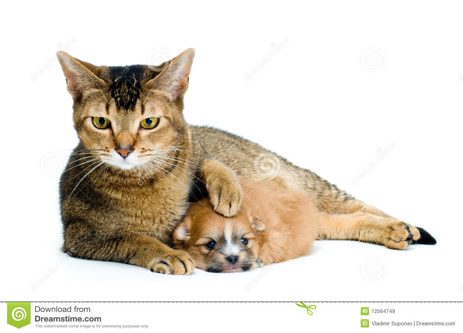 chat en chihuahua