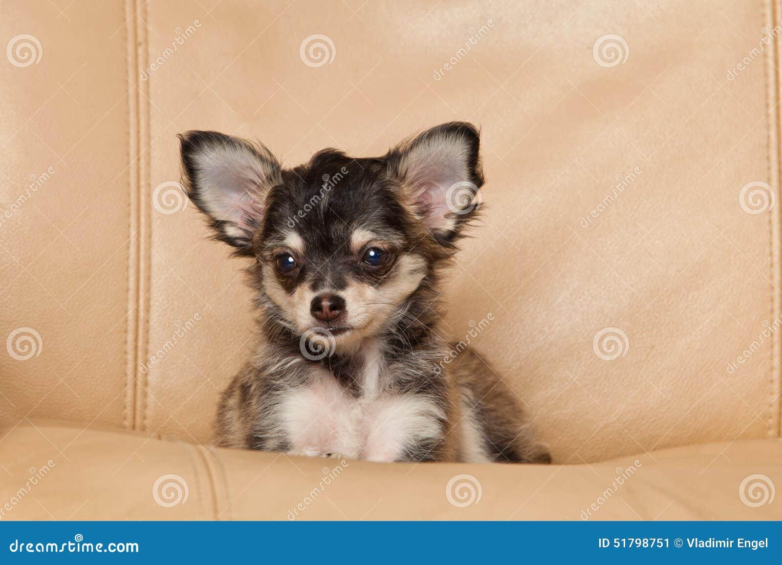 animal mignon petit chien - photo #7
