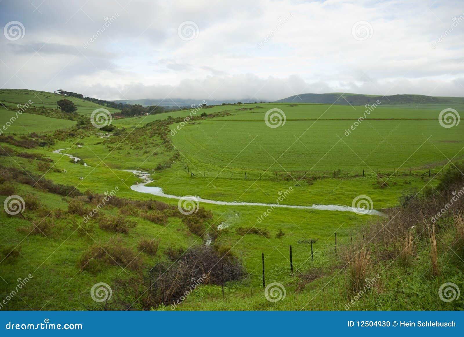 Chmurna dzień poly zieleń