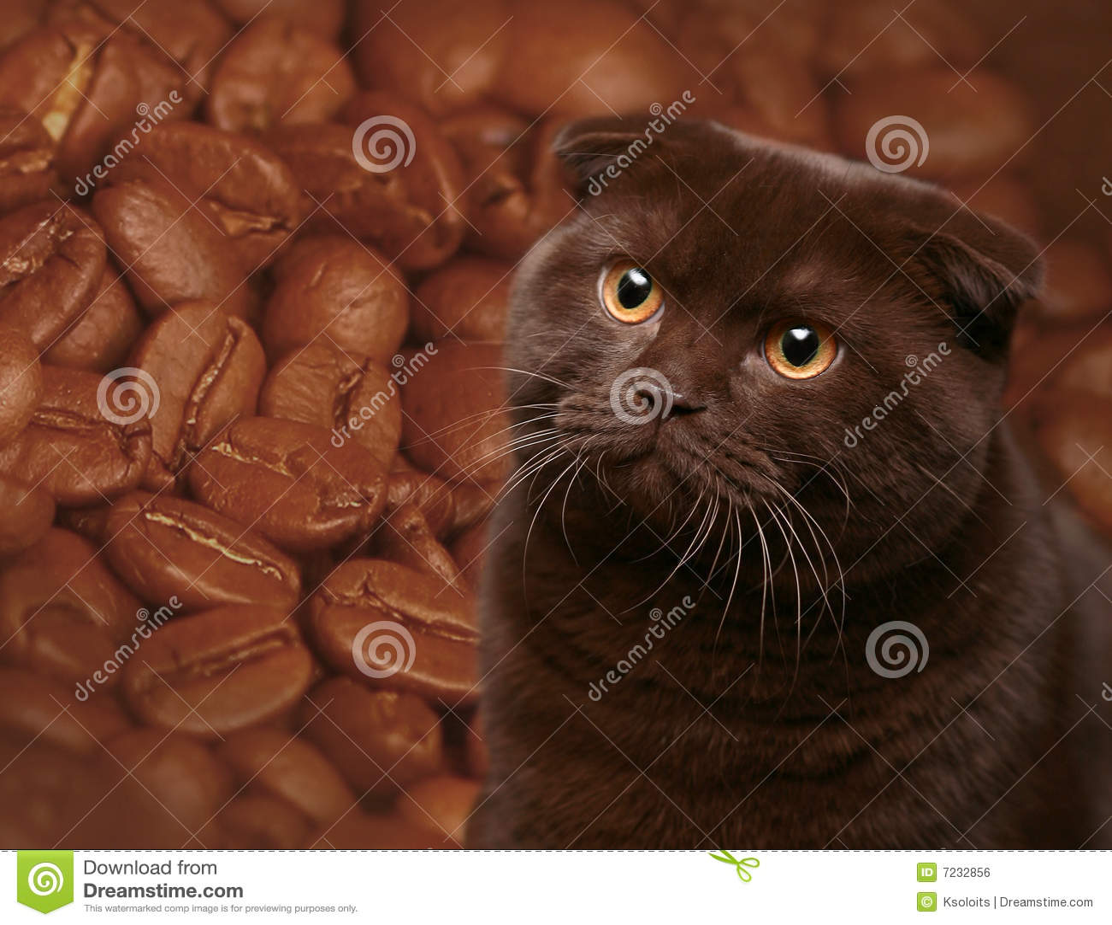 Chocolate Cat Royalty Free Stock Image - Image: 7232856