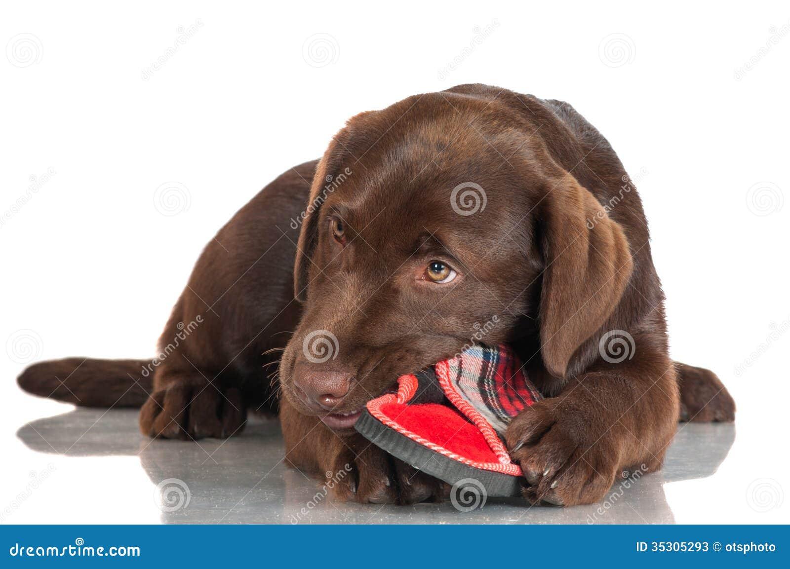 DistroWatchcom Puppy Linux