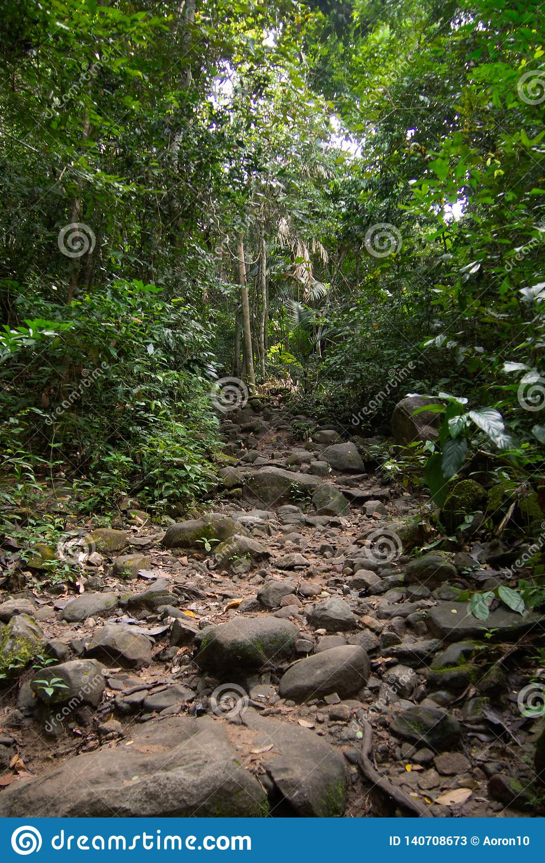 Chodzić wlec z małych i ampuły skałami w zielonym lesie
