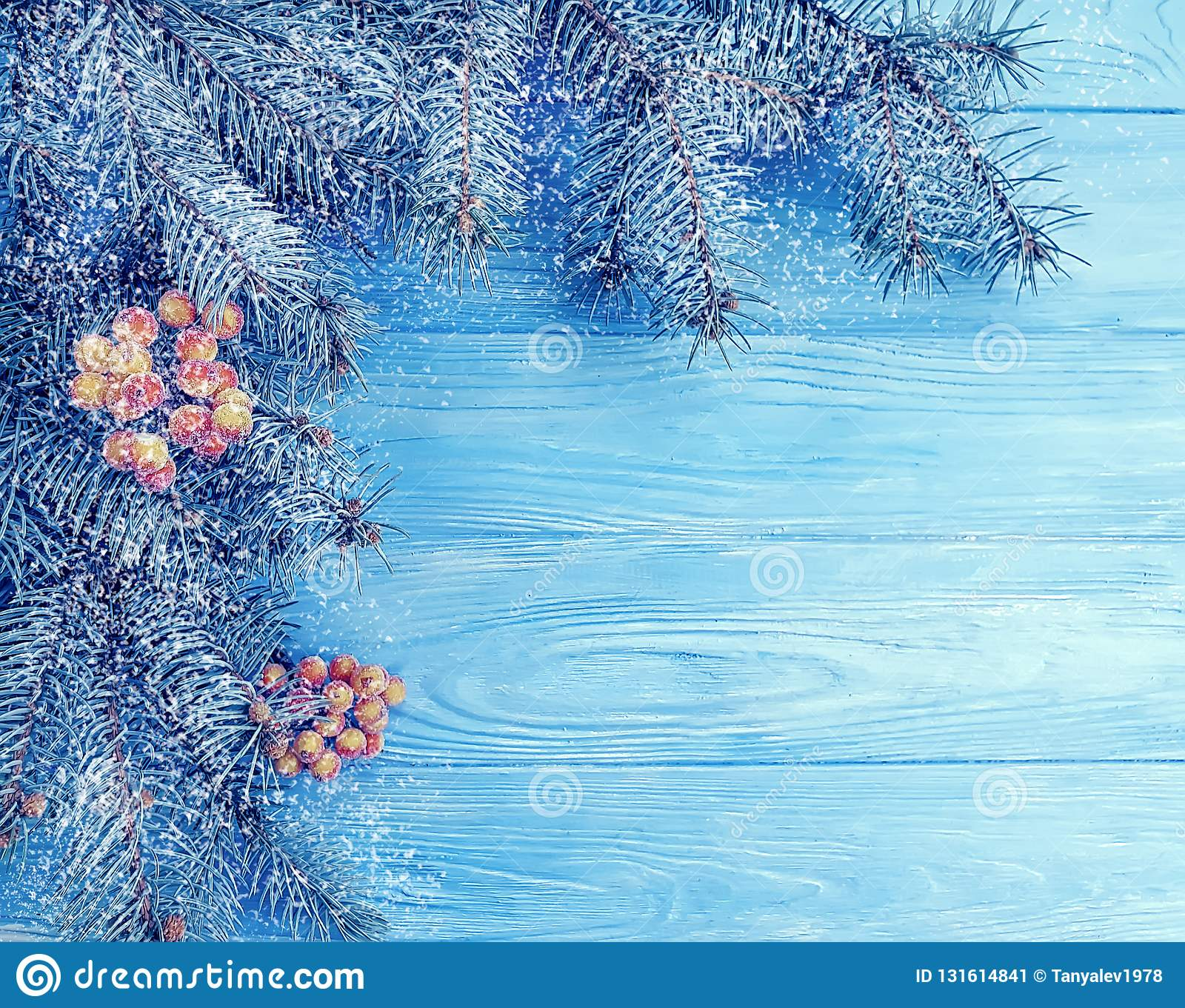Choinki zimy gałąź wakacyjnego mroźnego powitania dekoracyjny sezon na błękitnym drewnianym tle, śnieg