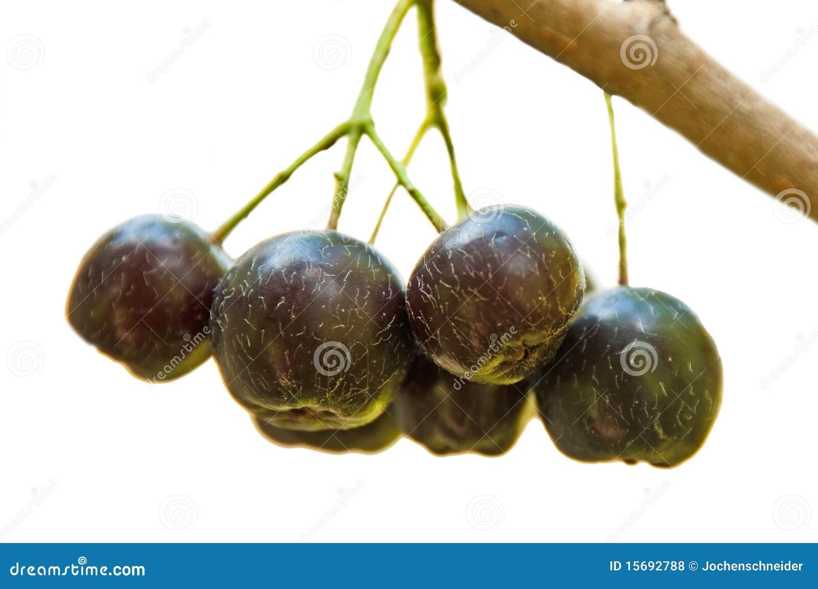 Choke-berry