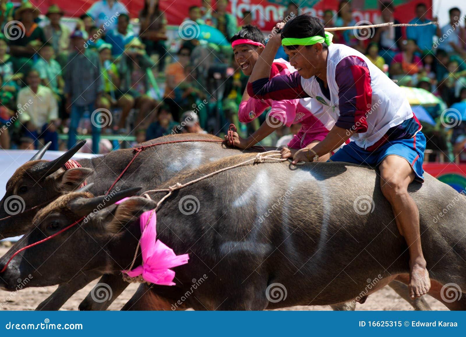 Chonburi bawolie rasy